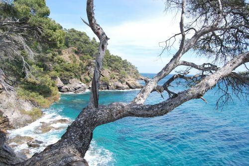 sea tree azure blue