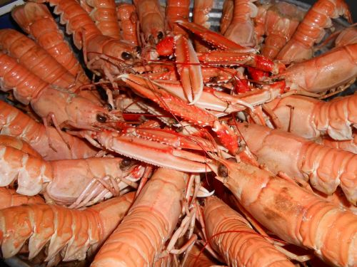 sea crayfish seafood