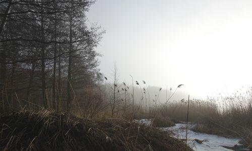 sea mist landscapes