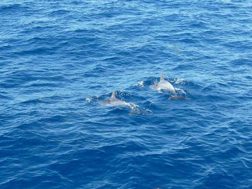 sea,dolphin,water