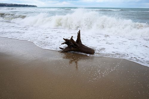 sea,wood,beach,water,nature,coast,old wood,holiday,sand beach,tree stocking,tribe,idyllic,drift wood,wave,lake