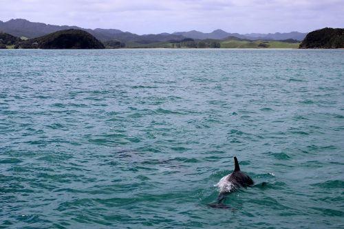 sea dolphin meeresbewohner