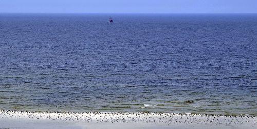 sea birds the seagulls