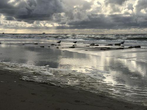 sea seagull abendstimmung