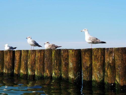 sea the baltic sea the seagulls