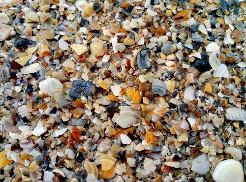 sea sand seashells