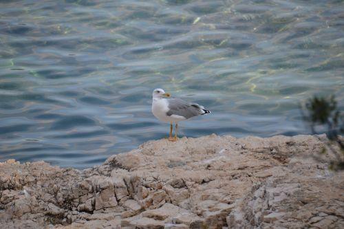 sea water seabird