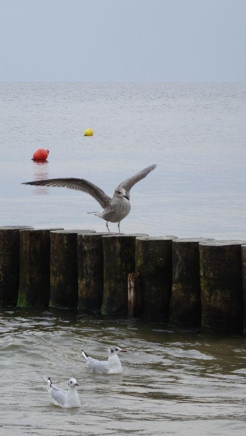 sea bird animal