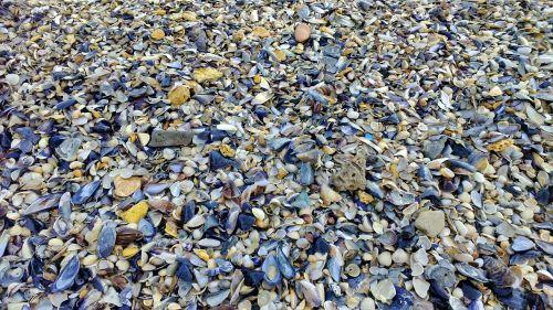 sea beach seashells