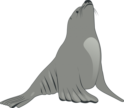 sea lion animal