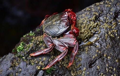 sea  crab  rocks
