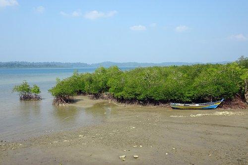 sea  coast  mangroves