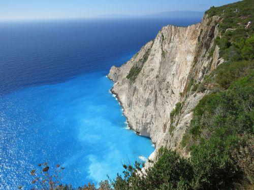 sea cliff plant