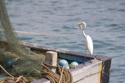 sea  boat  stork