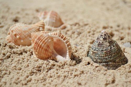 sea  seashells  sand