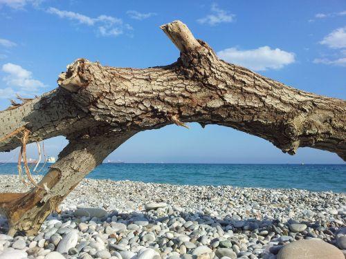 sea pebble beach log