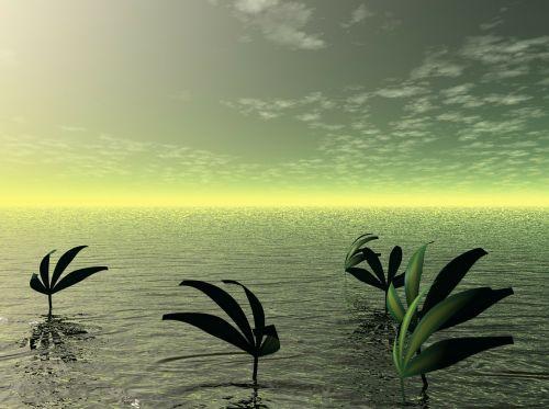 sea ocean water