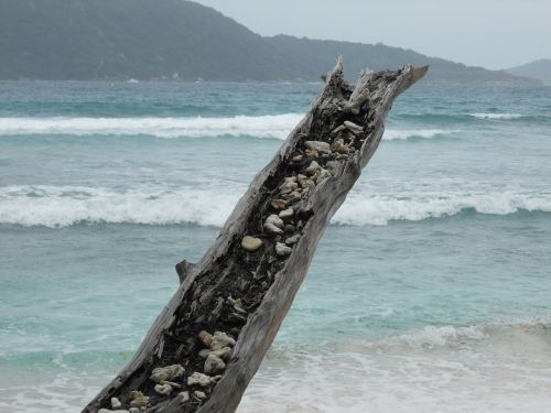 sea mussels tree stocking