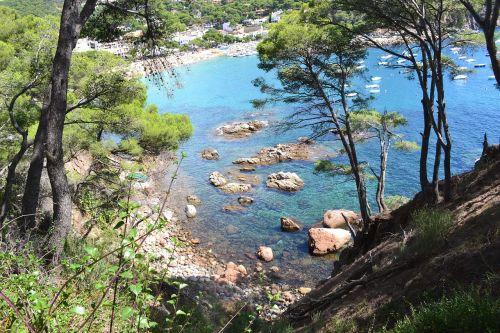 sea pine side