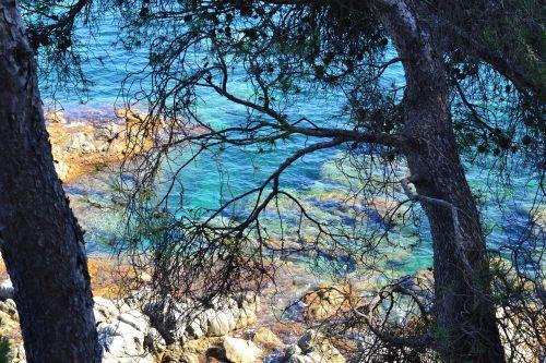 sea turquoise pine