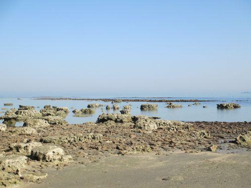 jūros paplūdimys,koralas,gamta,natūralus,sala,kraštovaizdis,pajūryje,papludimys,pajūris,Bangladešas,Natūralus grožis