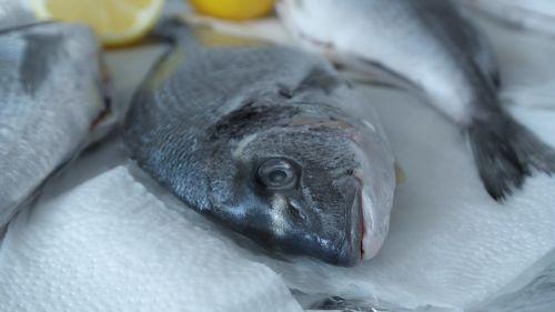 sea bream fish raw