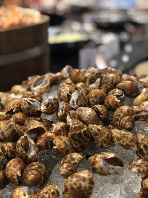 sea food  shell  seafood