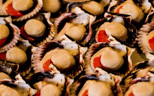 sea fruit  food  fresh