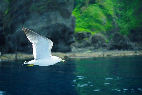 sea gull  sea  natural