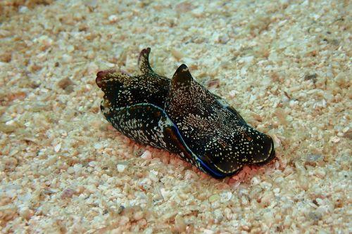 sea hare sea slug sea