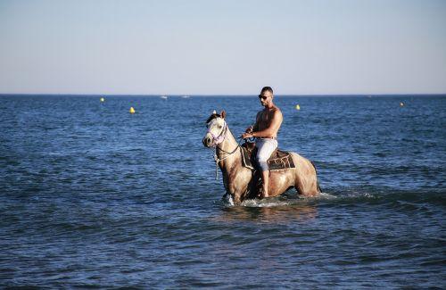 jūrų arklys,maudytis,megztinis,Žiurkė,batai,aštuonkampis,arkliai,paw,gyvūnai