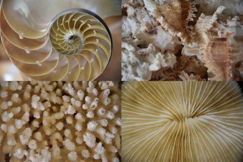 Sea Life Quad Pictures