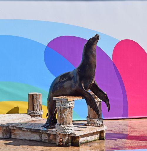sea lion show sea lion aquatic