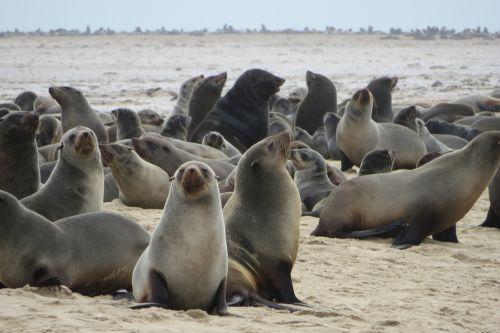 sea lions seals mammals