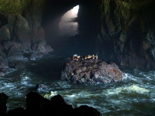 sea lions cave seals sea lions