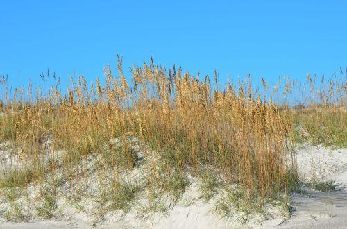 sea oats sand dunes