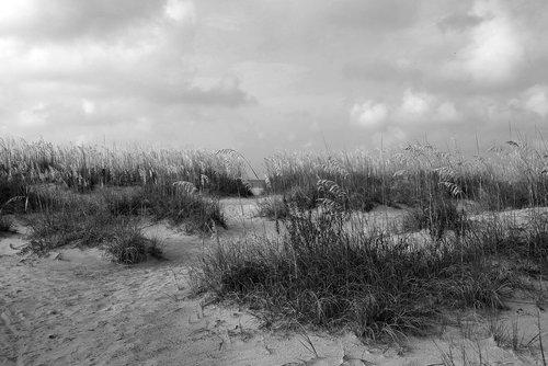 sea oats  beach  ocean
