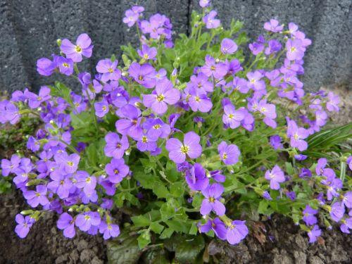 sea of flowers blütenmeer flowers