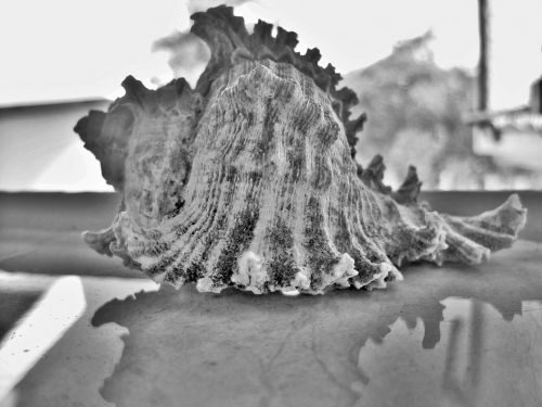 Sea Shell On Window Sill