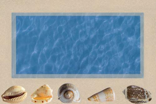 sea shells composition sea
