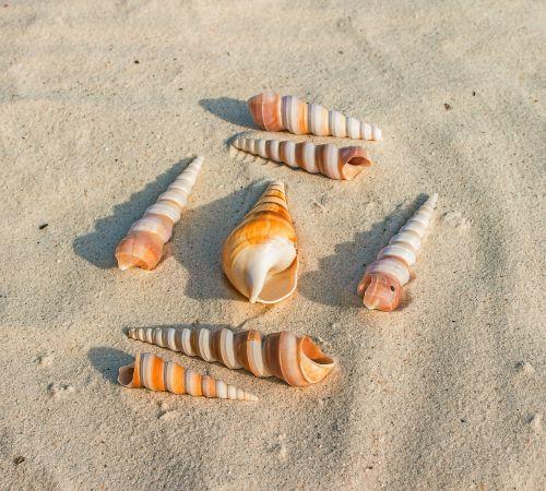 sea shells sand beach