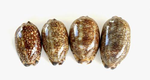 sea shells shells sea
