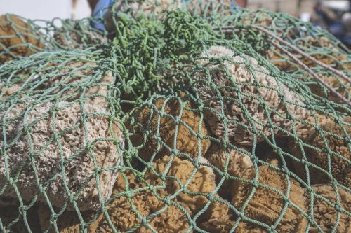 sea sponge sponge sea