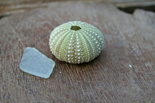 Sea Urchin Shell & Smoothed Glass