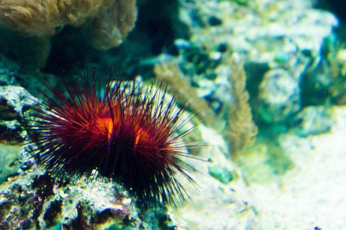 sea urchins coral sand