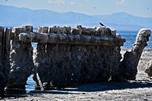 Sea Wall And A Bird