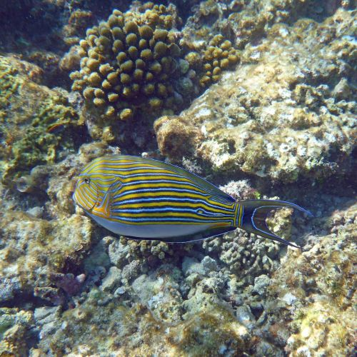 sea ​​water fish maldives snorkeling
