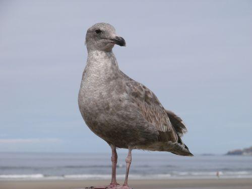 seabird beach seabirds