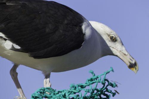 seabird gull sea