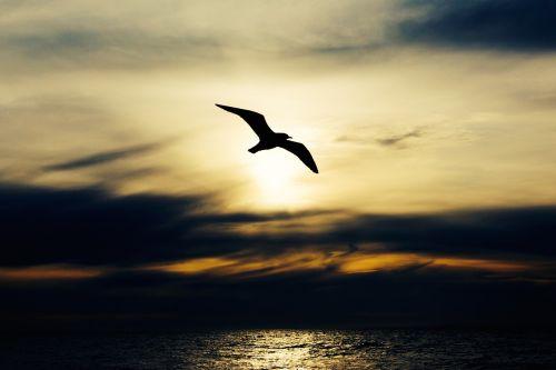 seabird bird nature